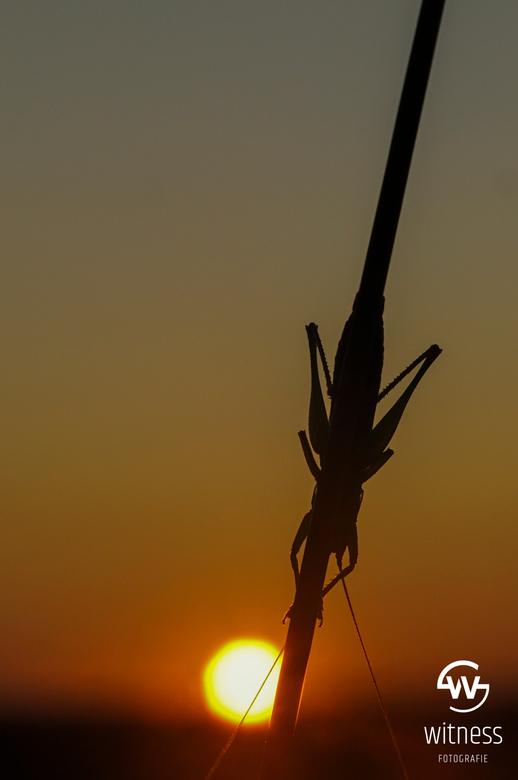 """Japie krekel - Throwback naar een paar weken geleden.<br /> Japie en ik , samen kijkend naar de zonsondergang <img  src=""""/images/smileys/smile.png""""/>"""