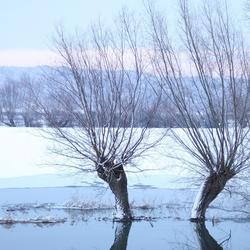 ijskoude tweeling