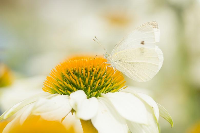 Zoek de vlinder