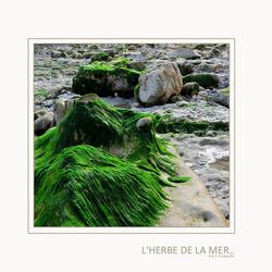 L'Herbe De La Mer..
