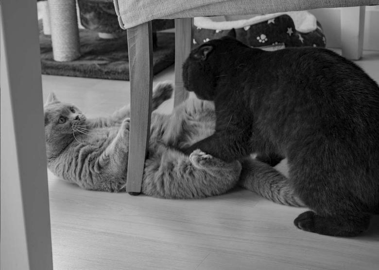 Attack! - Voor een fotoreportage heb ik deze zwart wit foto's gemaakt