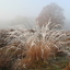 Een koude ochtend op de Ginkelse heide bij Ede
