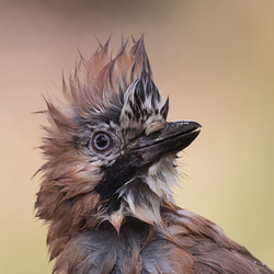 Bad hairday!