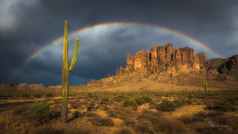 Saguaro rainbow
