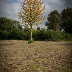Eenzame Herfstboom