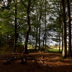 Herfst op de Oude Buisse Heide
