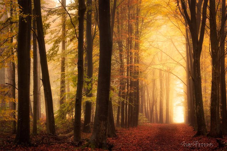 Autumn Warmth. -