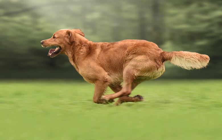 Run Forest Run