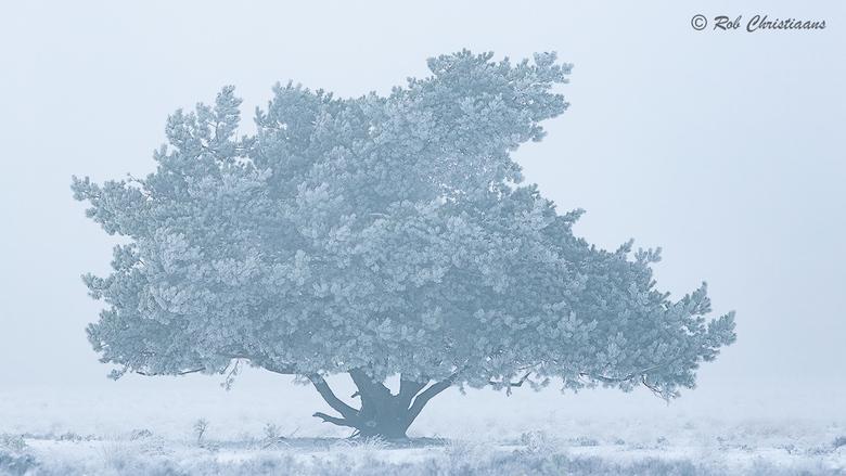 Solitaire - Vorige week vrijdag was ik bij park de Veluwezoom. Er lag nog sneeuw van eerder die week. Die ochtend was het goed koud, de mist, sneeuw e