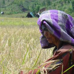 vrouw in rijstveld