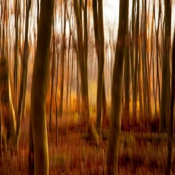 Zie door de bomen het ............