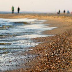 Strandschelpjes