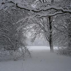 Stadspark in sneeuw