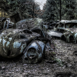Old beetles in the woods