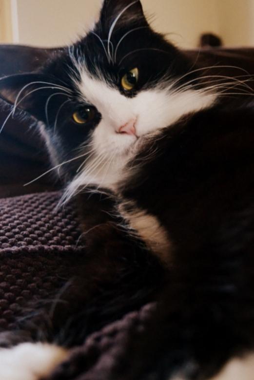 Ik ben Salie en ik ben lief - Lekker mijn schatje weze fotograferen