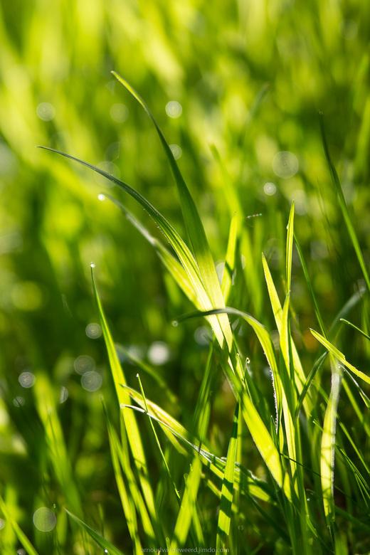 50 shades of green ;-)