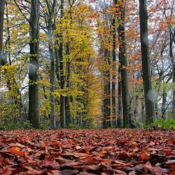 Gewoon...herfst