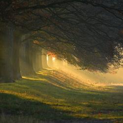 Elsloo trees