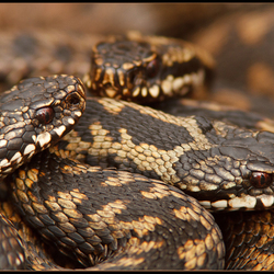 Close to the snakes!