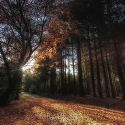 Herfstkleuren in de zon