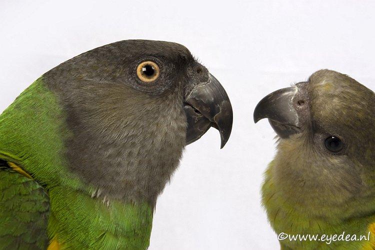 Love birds... -
