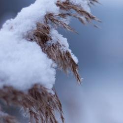 Ochtend sneeuw