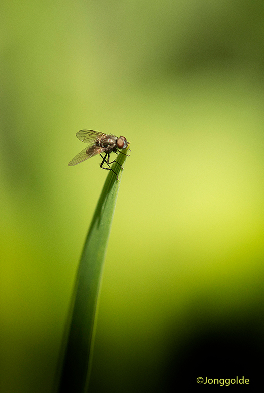 Even gewacht op de fotograaf ... - Ik zag hem helemaal achter in de tuin zitten en zelfs nadat ik de camera binnen uit de tas had gehaald en de telele