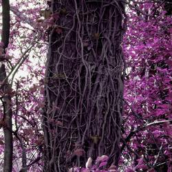 Elfish Tree