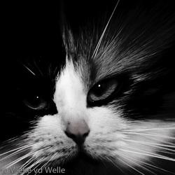 The little tiger... wijffie