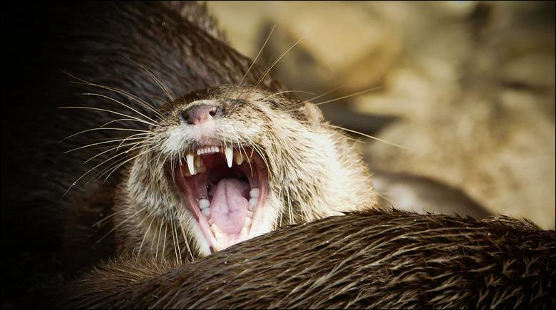 Bewerking: om je rot te lachen zeg...........