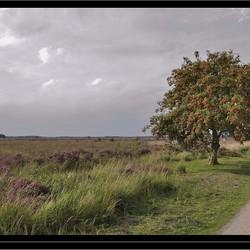 Oranje Boven in het Fochteloërveen ....