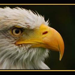 Watervogel1
