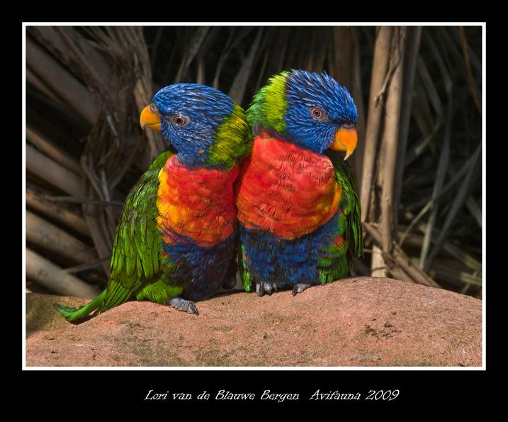 Lori Van de Blauwe Bergen images