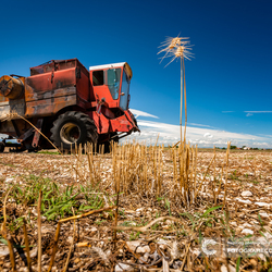 Urbex in het veld;-)
