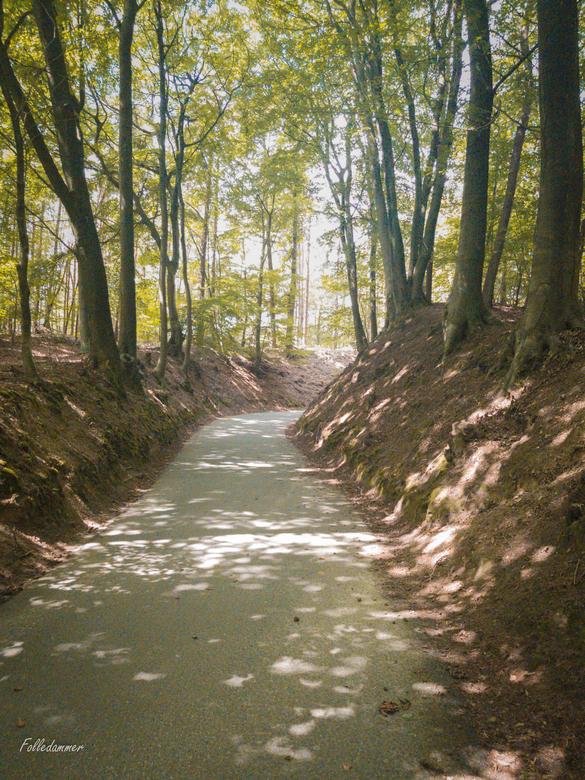 Rozenbos, De Steeg - Het fietspad Rozenbos nabij De Steeg in Nationaal Park Veluwezoom<br /> <br /> Dit is het &#039;steilste stuk&#039; van de bekl