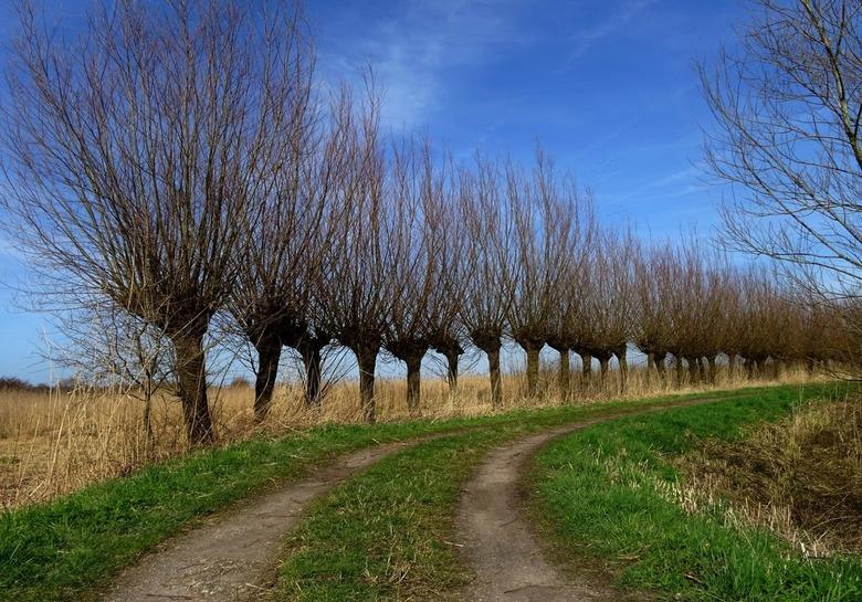 Lente kleuren in de polder - De lente komt eraan !