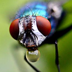 Vlieg waterdrager