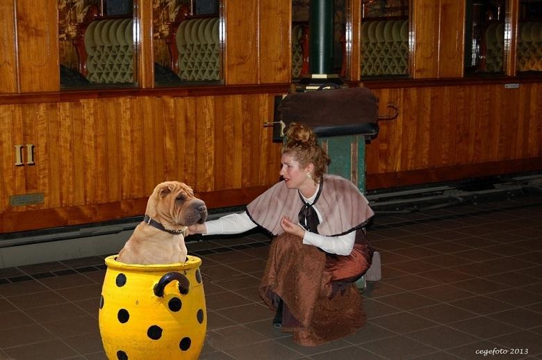 bewerking: de hond in de pot vinden | bewerkte fotografie foto van