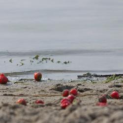 Aardbeien onderweg