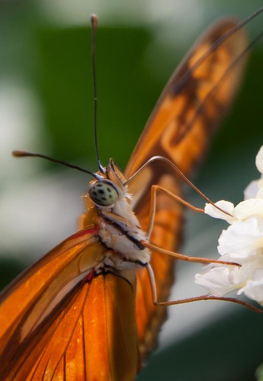 Vlinder - Vlinder.