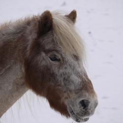 buiten paard