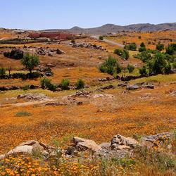 Oranje velden...