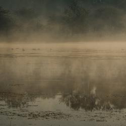 Blauwe Kamer -  mist in de vroege morgen (1 van 1)
