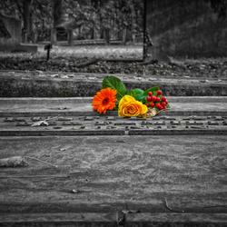 Rustplaats voor bloemen