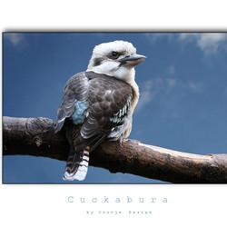 Cuckabura