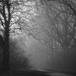 The Fog, zwart wit (in het groot mooier)