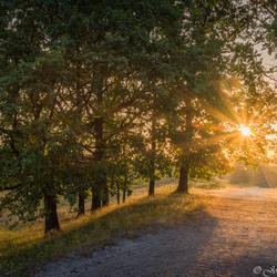 Brunssummerheide zonsopkomst zonnestralen