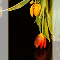 Gek op tulpen