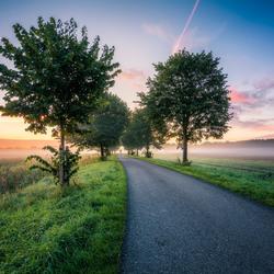 Bomen laan tijdens zonsopkomst
