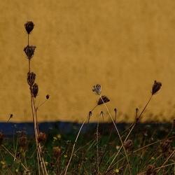 richting herfst